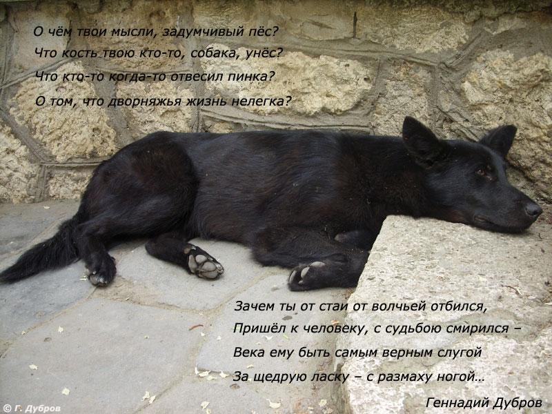 Собачья жизнь.