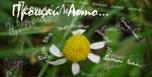 Стихи о природе и временах года: весне, лете, осени, зиме. Пейзажная лирика. О природе.